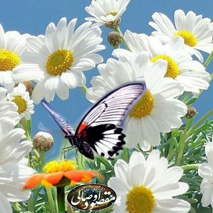 anjani.ir#گل #گلها #flowersofinstagram  #flowers #flower #flowercrown  #flowerstagram #flowery #flower #flowerstagramer